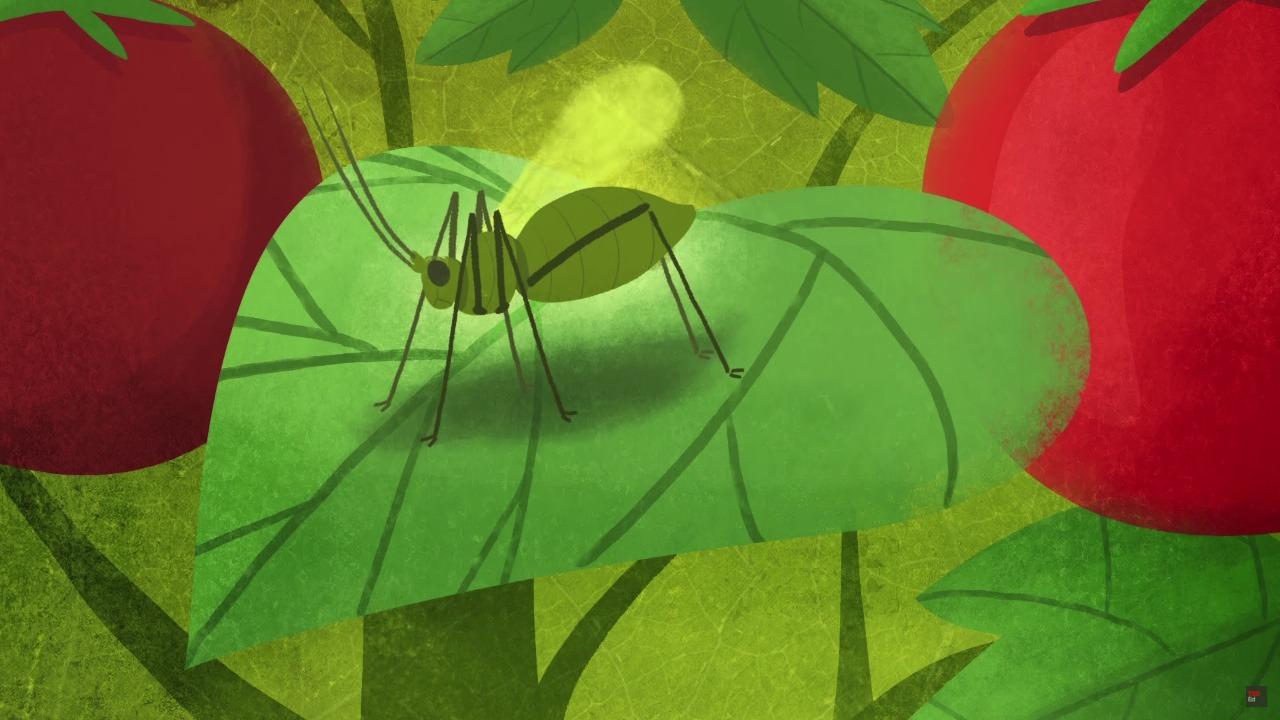 PLANT DEFENSES -