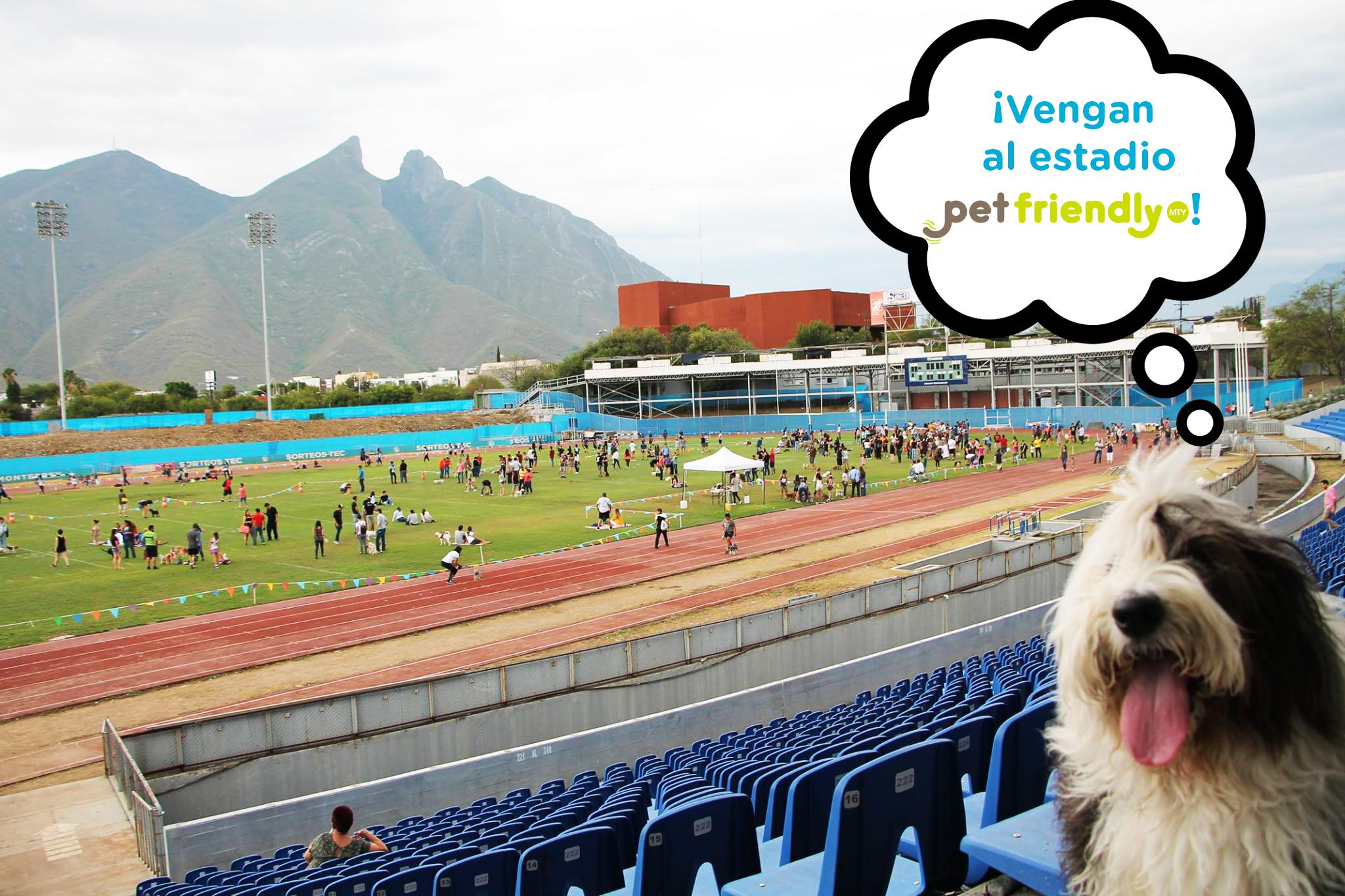 La  Vicky the sheepdog  tomándose un selfie en el Estadio Tecnológico.