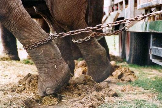animales_maltratados.jpg