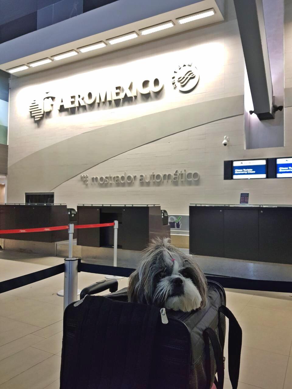 AeroMexico 1.JPG