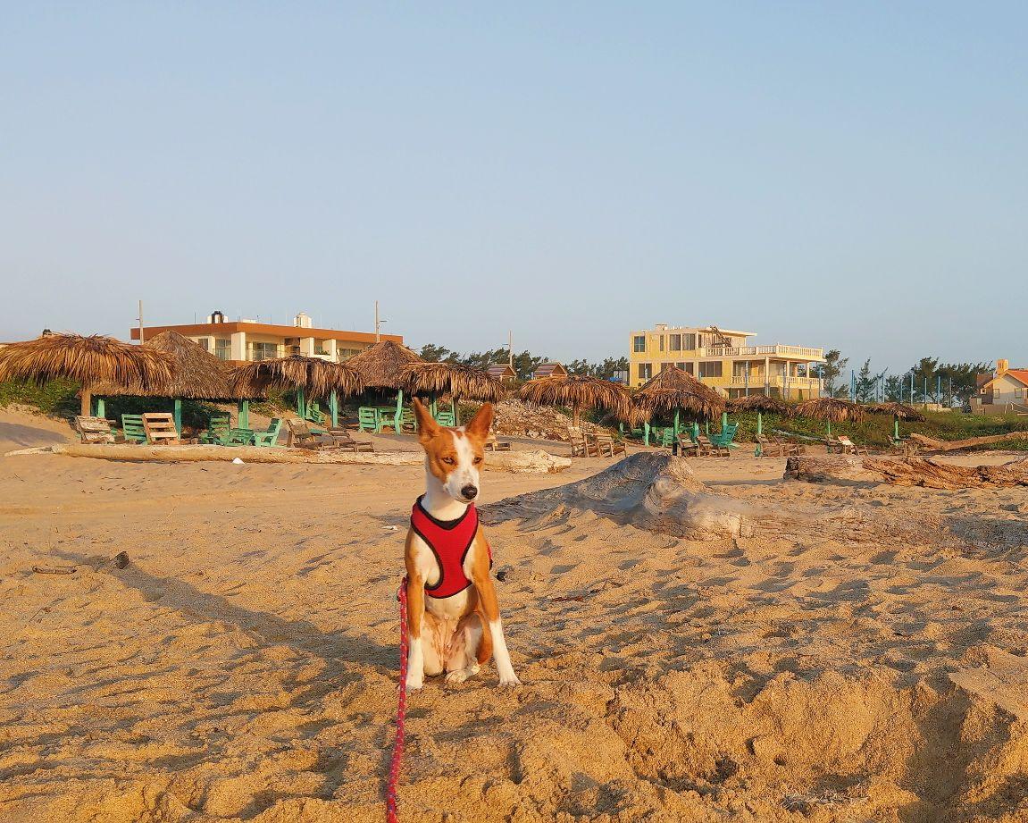 Nawalee Playa.jpg