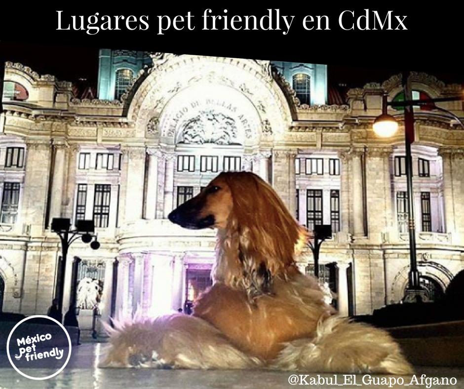 Sitios pet friendly - En Ciudad de México