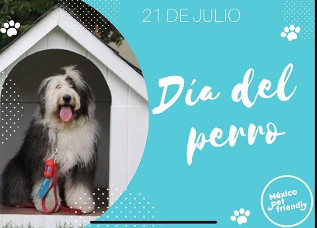 Hoy es el #DiaDelPerro 🎉 es como navidad para #VickyTheSheepdog por eso les deseamos un día muy contentos con sus #Perros  Usa #PerrosReporteros cada que visites un sitio #PetFriendly y se parte de nuestro equipo que desde el 2012 está transformando a todo #México en un país más amigable con nuestras mascotas 🐾  #vacacionperruna2019 #PerrosDeMéxico #oldenglishsheepdog