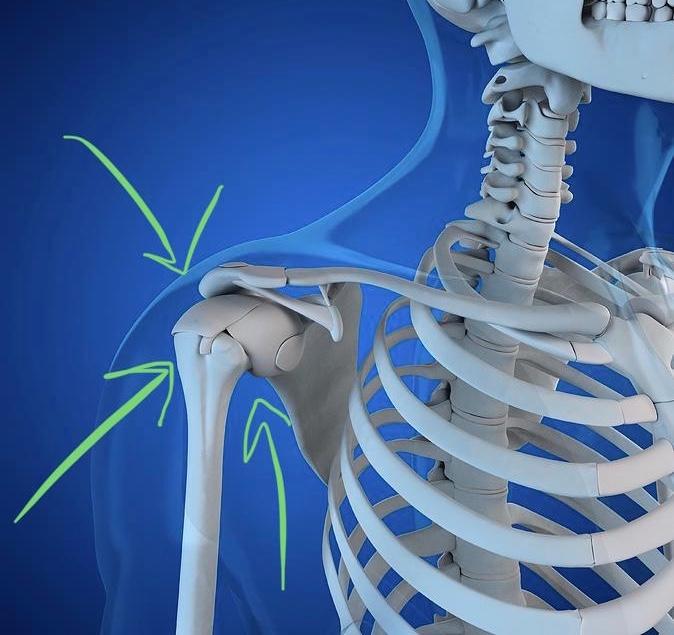Glenohumeral-Joint-Shoulder