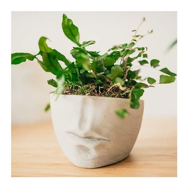 🌿🌿🌿 Kvetinky na predaj 🌿 🌿 🌿 2. Tieňomilná výsadba - 13e