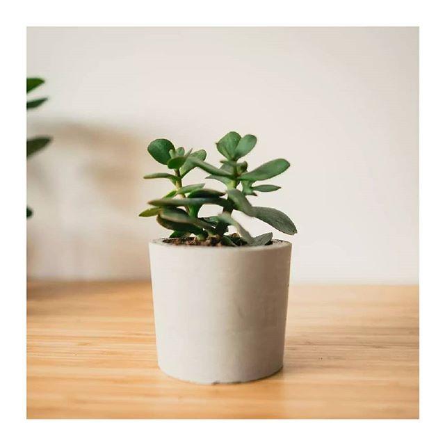 🌿🌿🌿 Kvetinky na predaj 🌿🌿🌿 1. Crassula v našom handmade črepníku - 8e