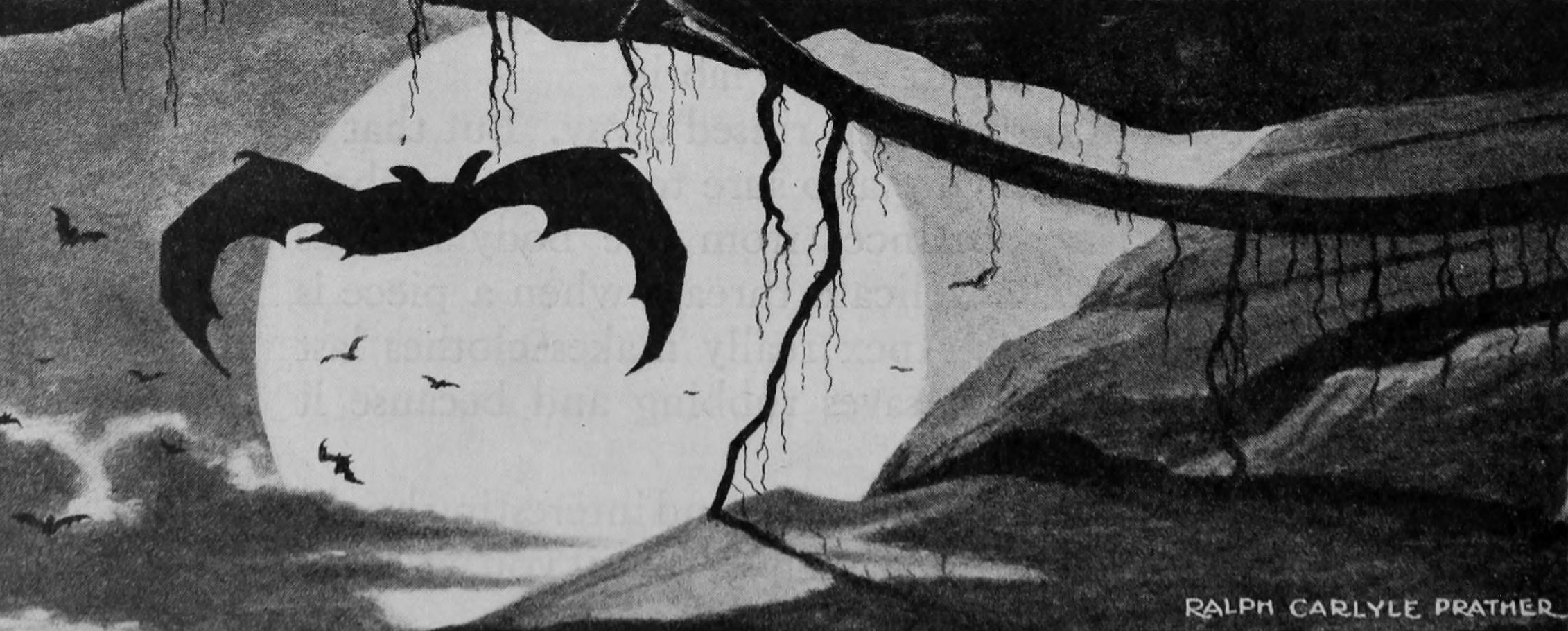 BATS - BY STEPHEN GRAHAM JONES
