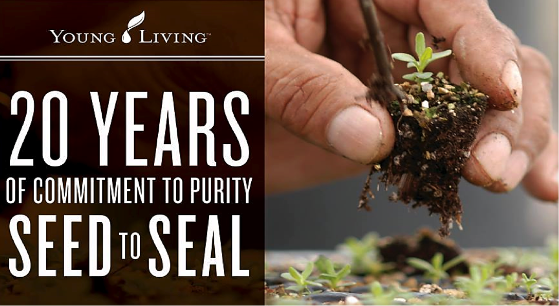 seedtoseal20years