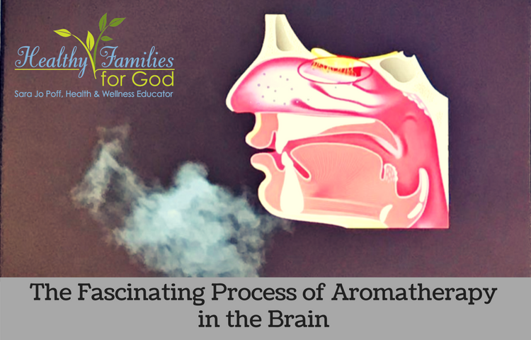 The Fascinating Process of Aromatherapy in the Brain.png