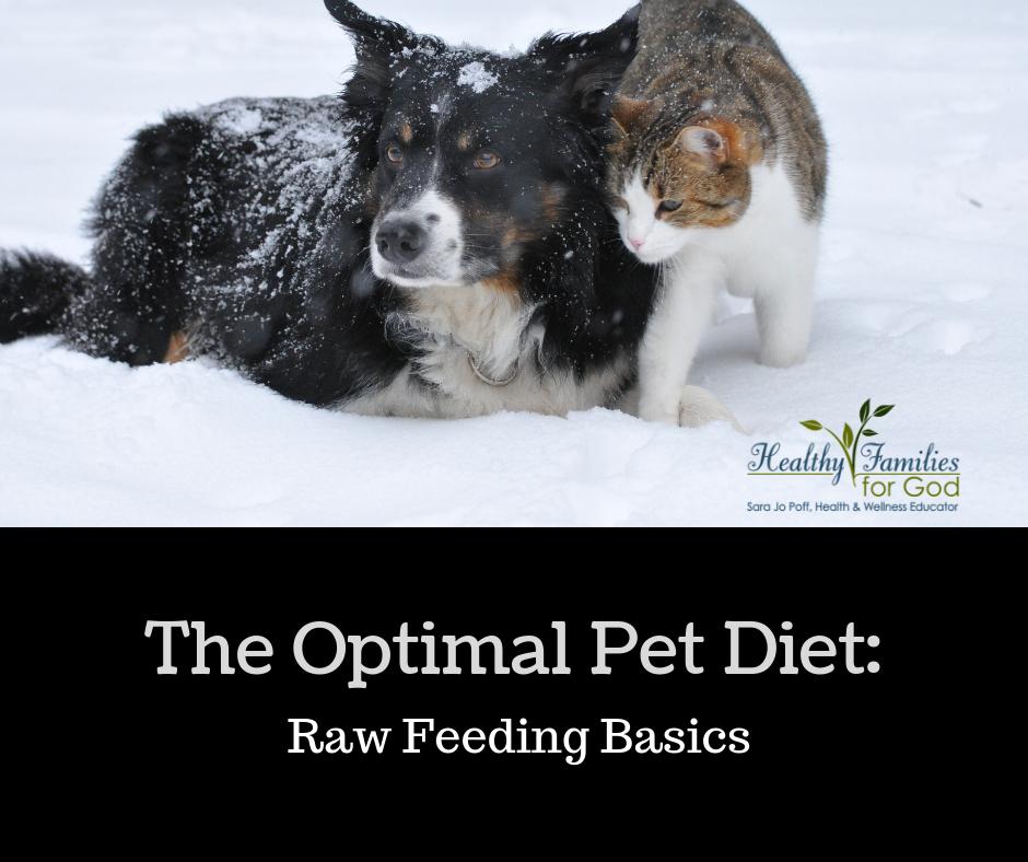 The optimal pet diet.png