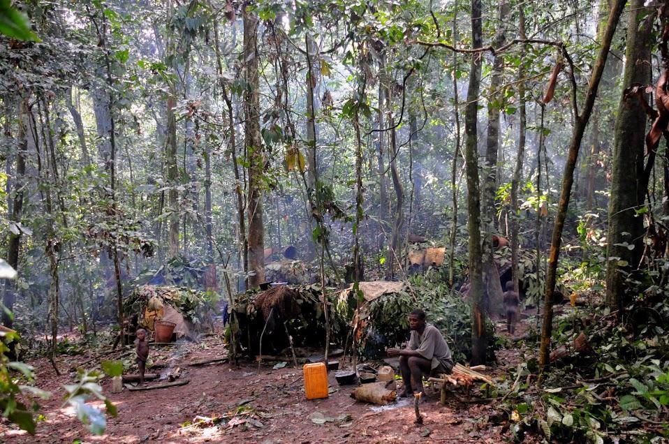 Living_on_the_rainforest_2.jpg