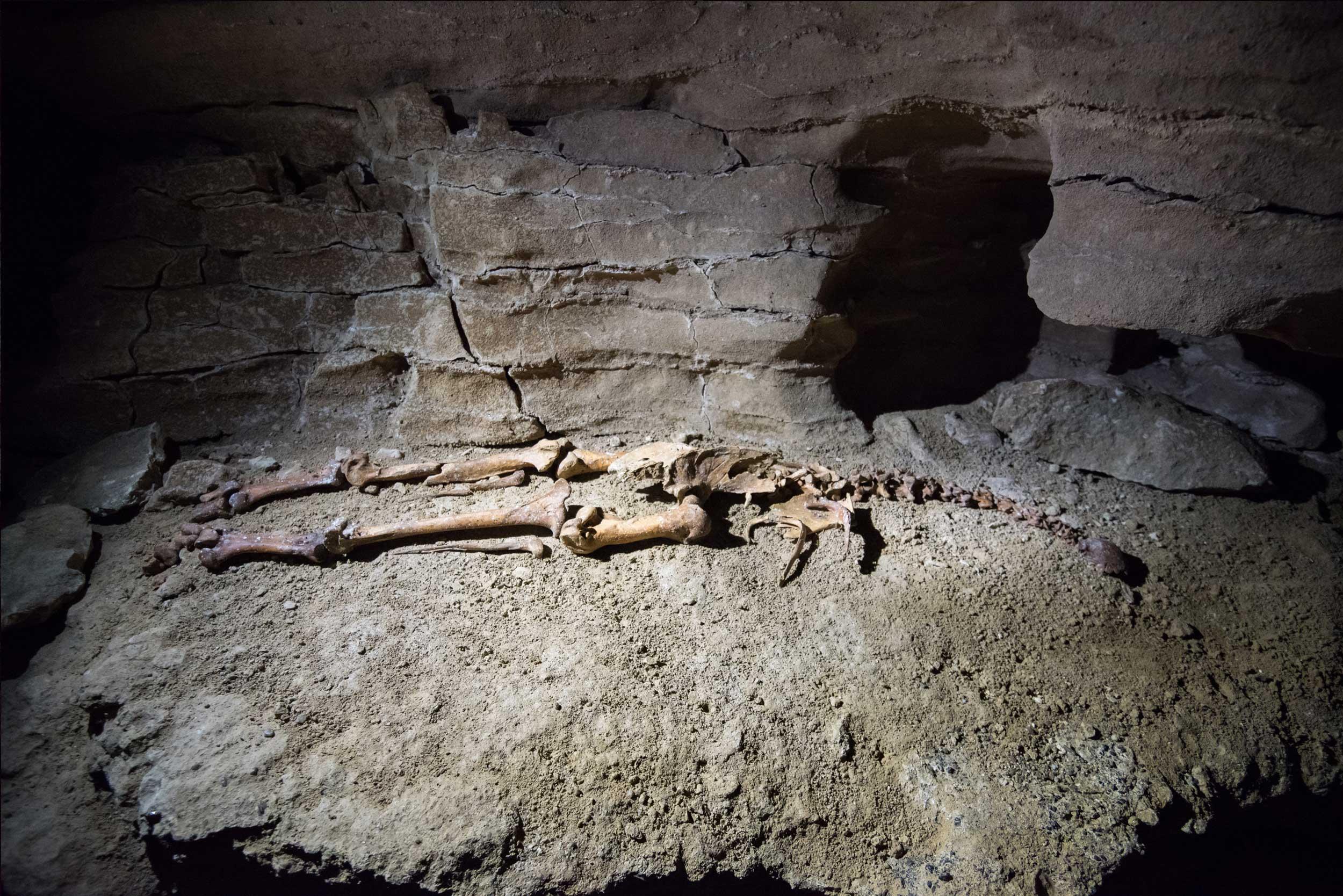 karamea-caves-(3).jpg