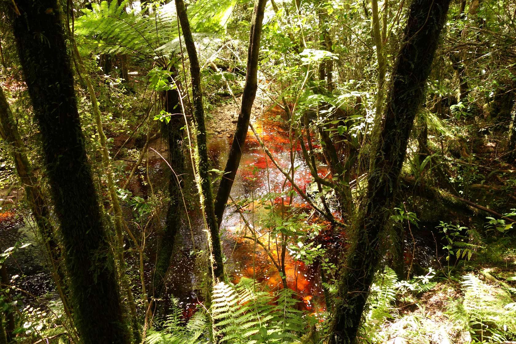 oparara-creek-1.jpg