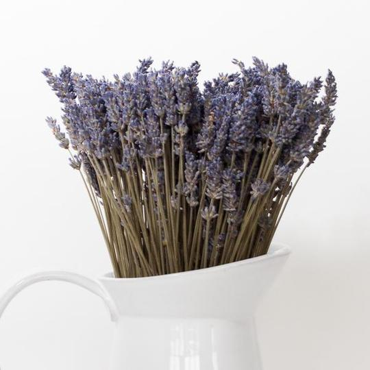 Lavender By the Bay    East Marion, NY      https://lavenderbythebay.com/