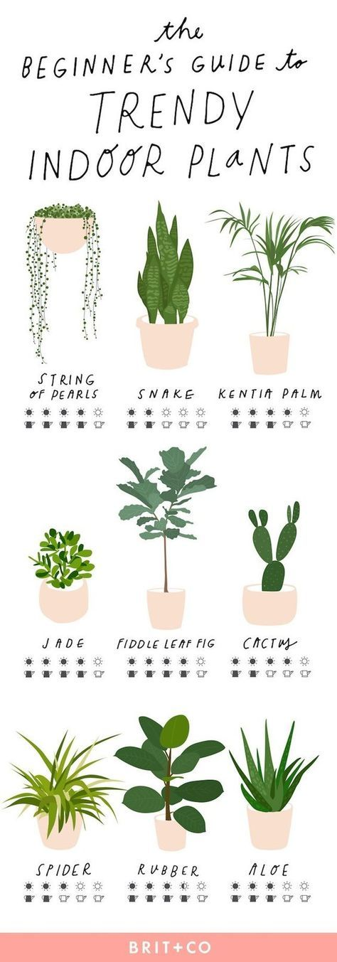 indoor-plants.png