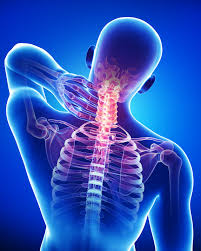 Neck Pain   The cervical spine, or neck, begins at the base of the skull. It is a coordination of networks which include nerves, bone, joints, and muscle directed by the brain and the spinal cord.