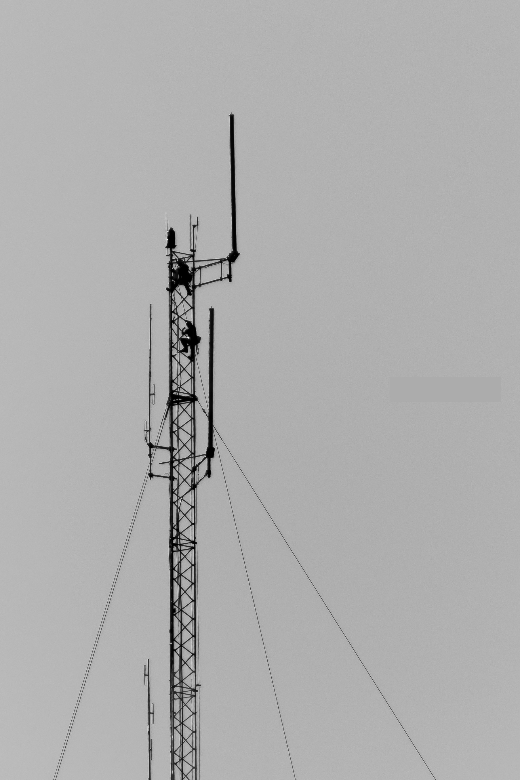Elite Tower, LLC - Elite Tower, LLC provides communication tower services for the Southeast and beyond. Located in the coastal empire of Savannah, GA, Elite Tower specializes in line and antenna installations and keeping towers equipped with the most up to date technology. Elite Tower, LLC is a family business that values close customer relationships and quality control. Elite Tower is dedicated to its customers in providing high end work in a timely manner.