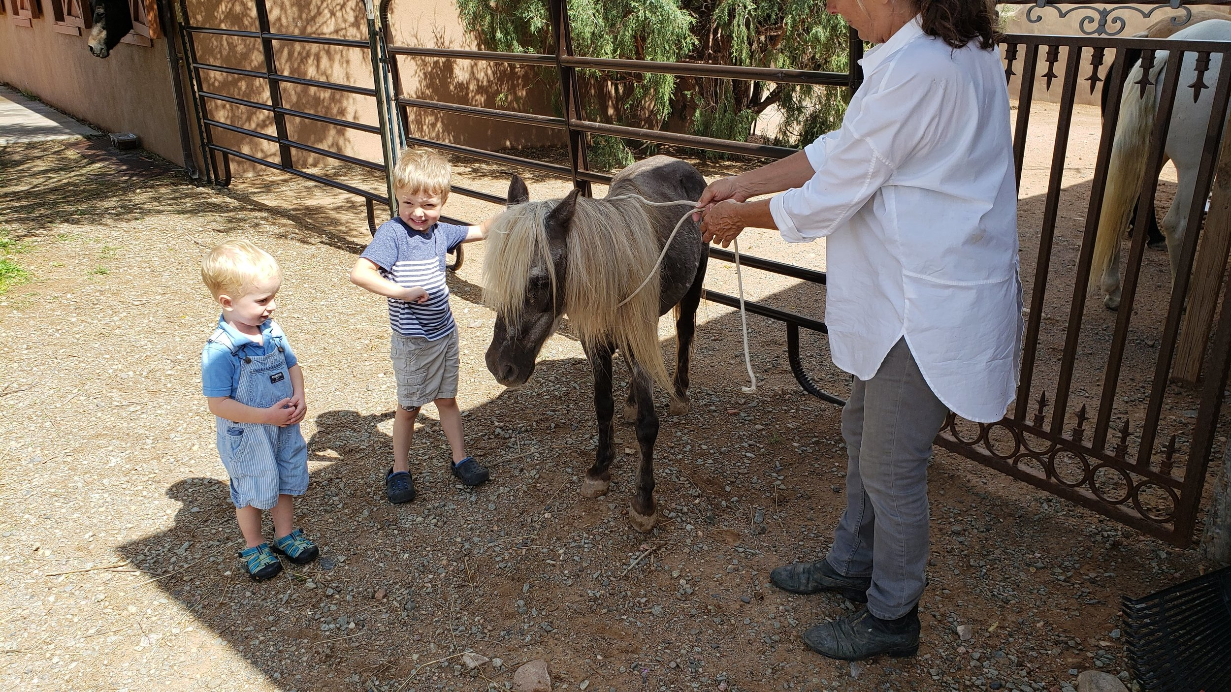 Our host was so sweet and gracious, and brought out the miniature horse for the boys to pet!