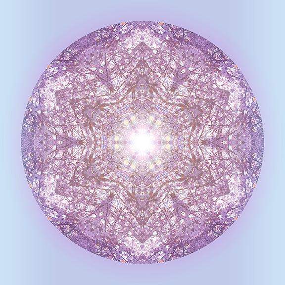PinkCanopy_web.jpg