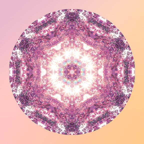 DreamCycle_5in.jpg