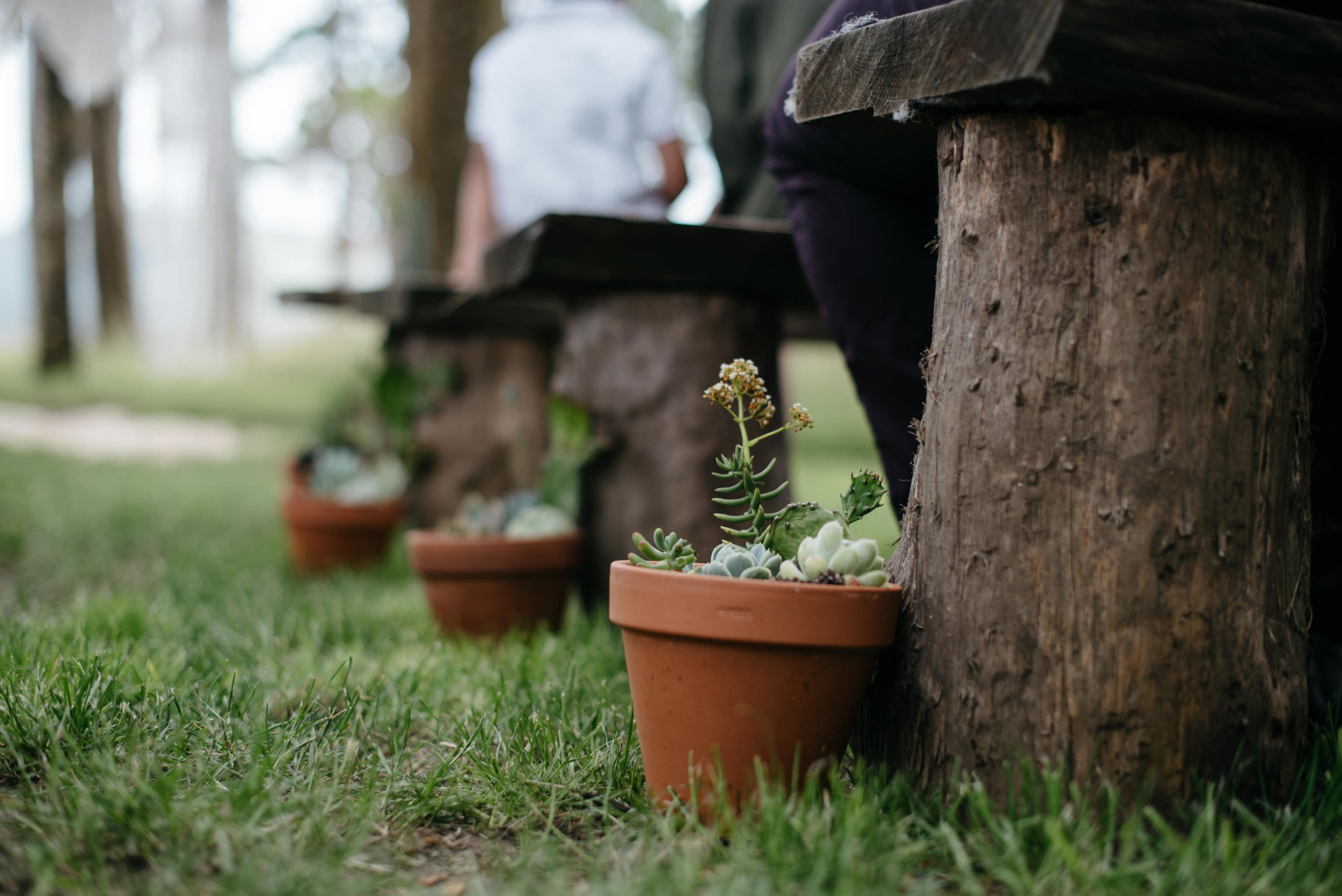 Josie and Ryan EPHEMERAL CREATIVE Jonkers Farm New Zealand Wedding succulent wedding details
