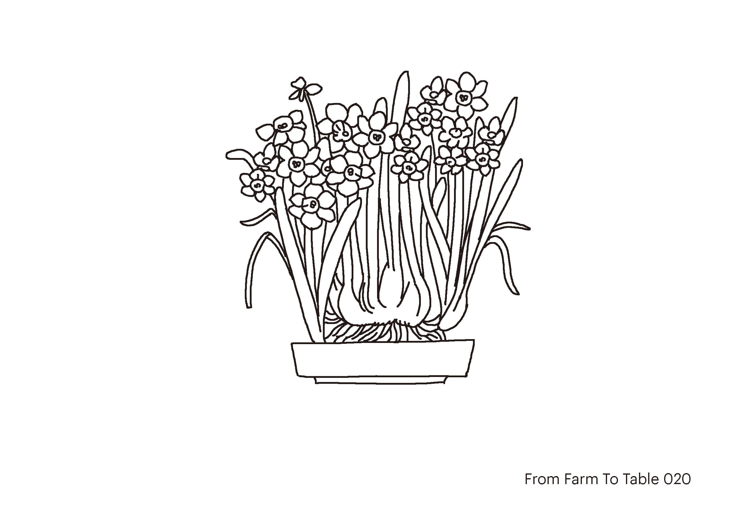 farm to table - Don_s drawing-20web.jpg