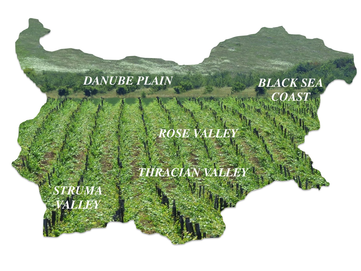 Five main viticultural regions of Bulgaria (photo of Bessa Valley Winery)