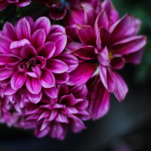 floral_nature_rain_flower_natural_green_bloom_botanical-625166.jpg!d-Quick Preset_500x500.png