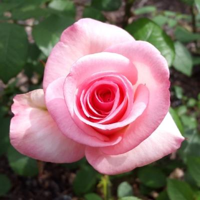 flower-3159824_1920.jpg