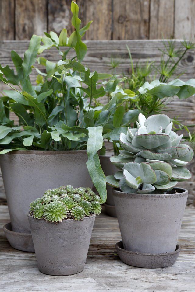 Bergs_julie_graa_samling_plante_krukker.jpeg