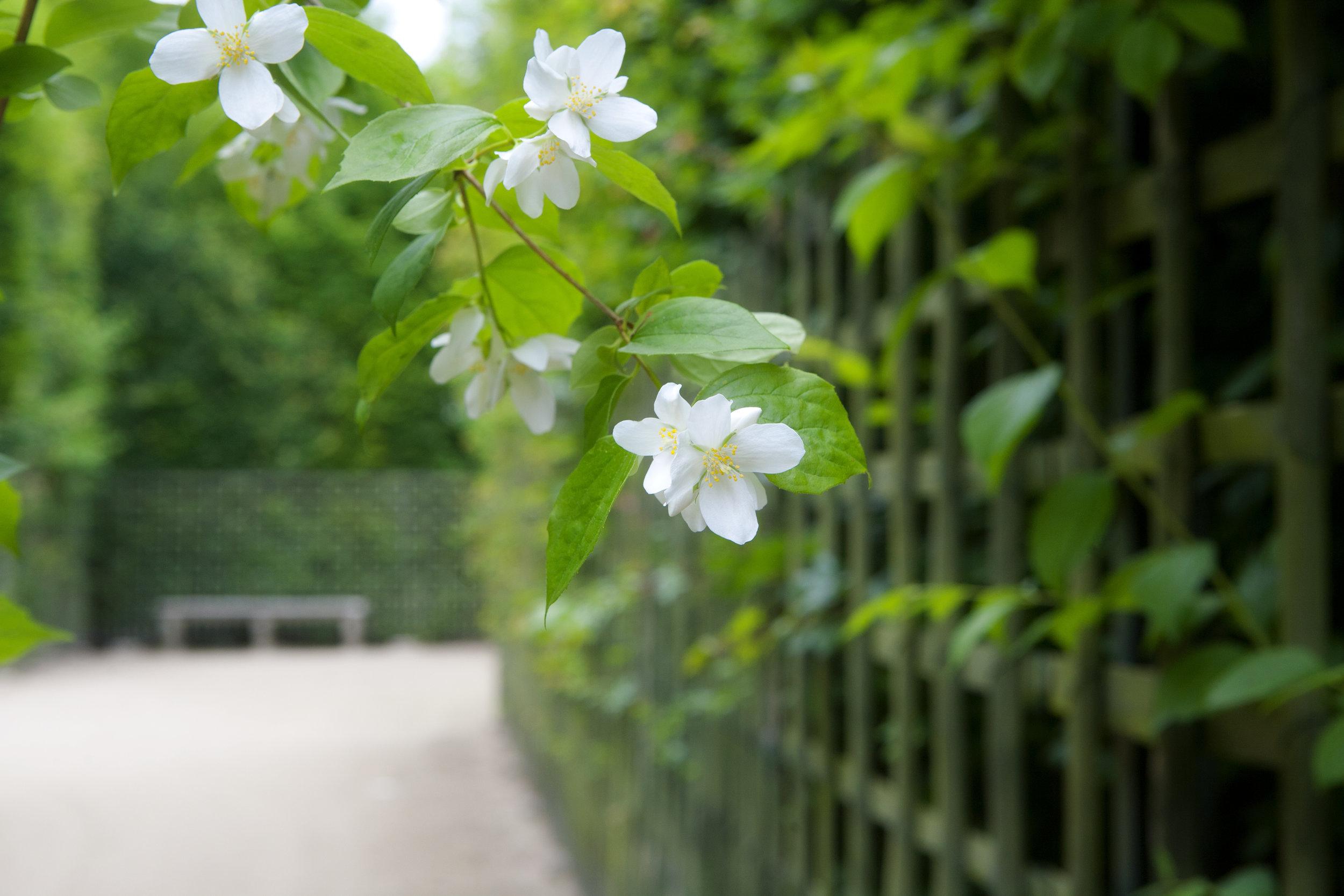 A walk in Versailles