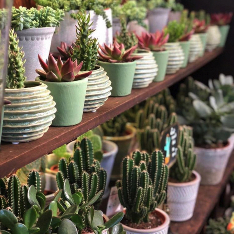 Pots & Holders - Well placed plants can transform your home, bringing character, structure and serenity to any room. However, picking the right pot is almost as important as choosing the right plant. One key factor to consider is drainage.Most houseplants don't like standing in water, so your pot should have a hole at the bottom to allow water to escape. If you choose an indoor pot without drainage holes, it's best to keep the plant in its original plastic container, placing it inside your chosen decorative pot on a layer of gravel or small saucer.With dozens of indoor pots to choose from, in a wide variety of styles and colours, we're sure to have the right one for you.