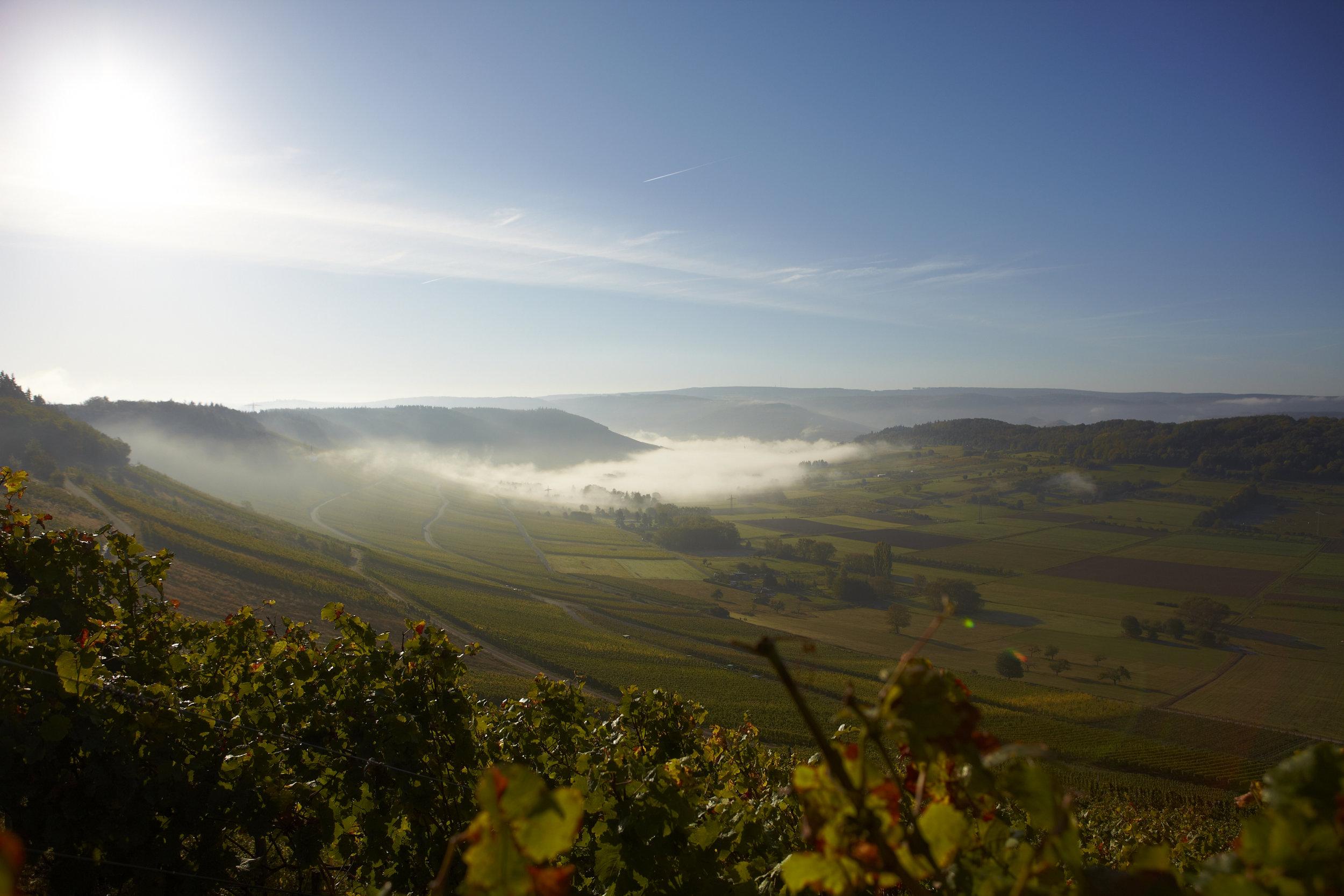 Weinlese Mosel - Weinlese und Kelterei von Steffen Prüm, Das Erdener Treppchen