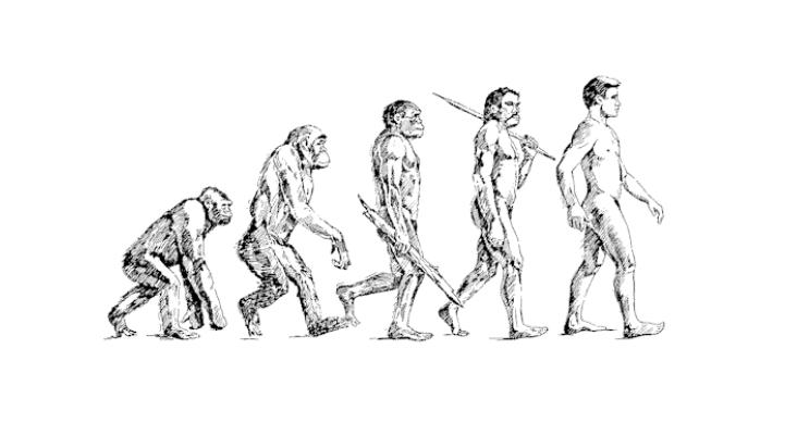 Linear human evolution