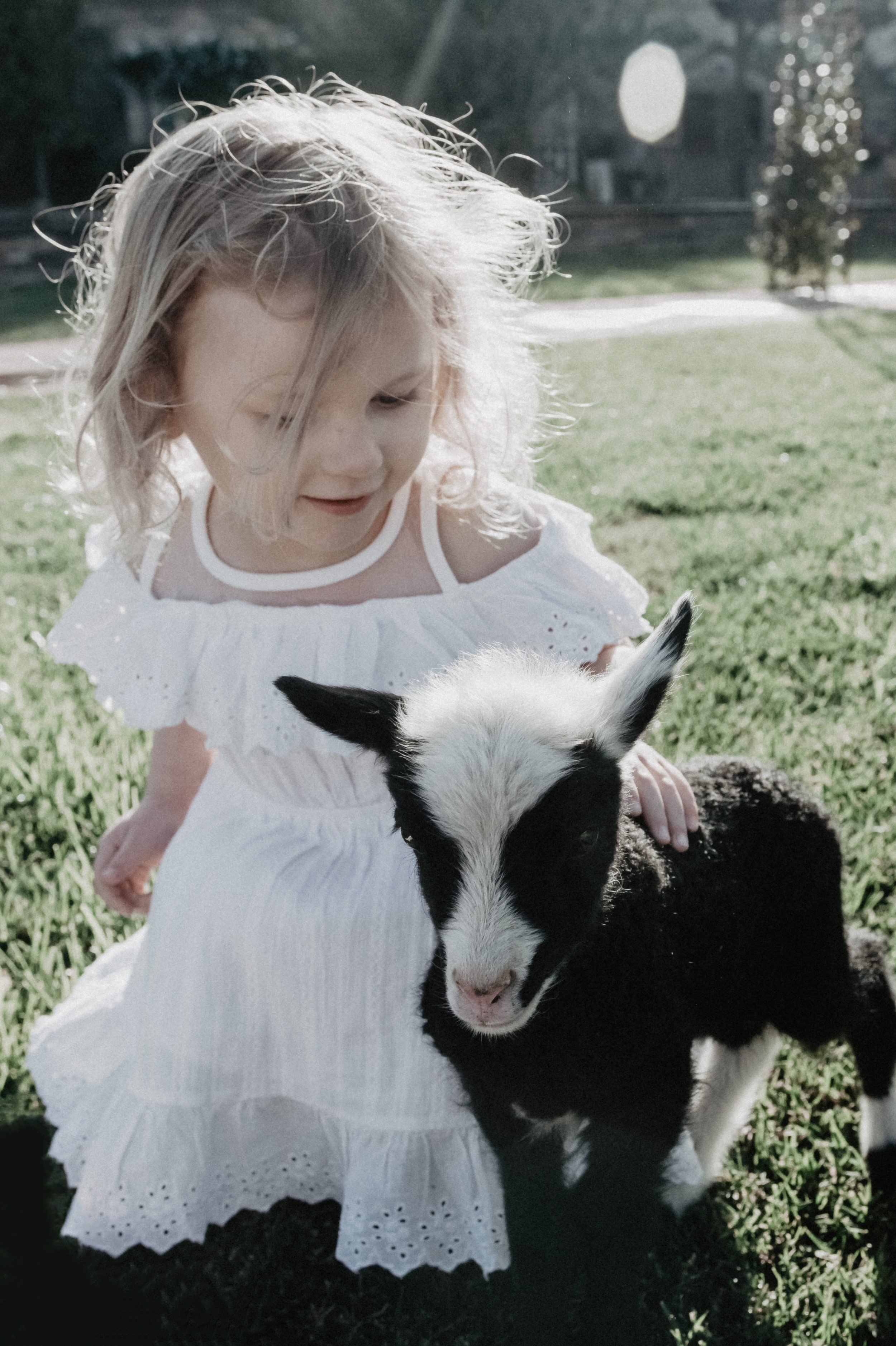 Girl with Baby Lamb taking Family Portraits in San Diego