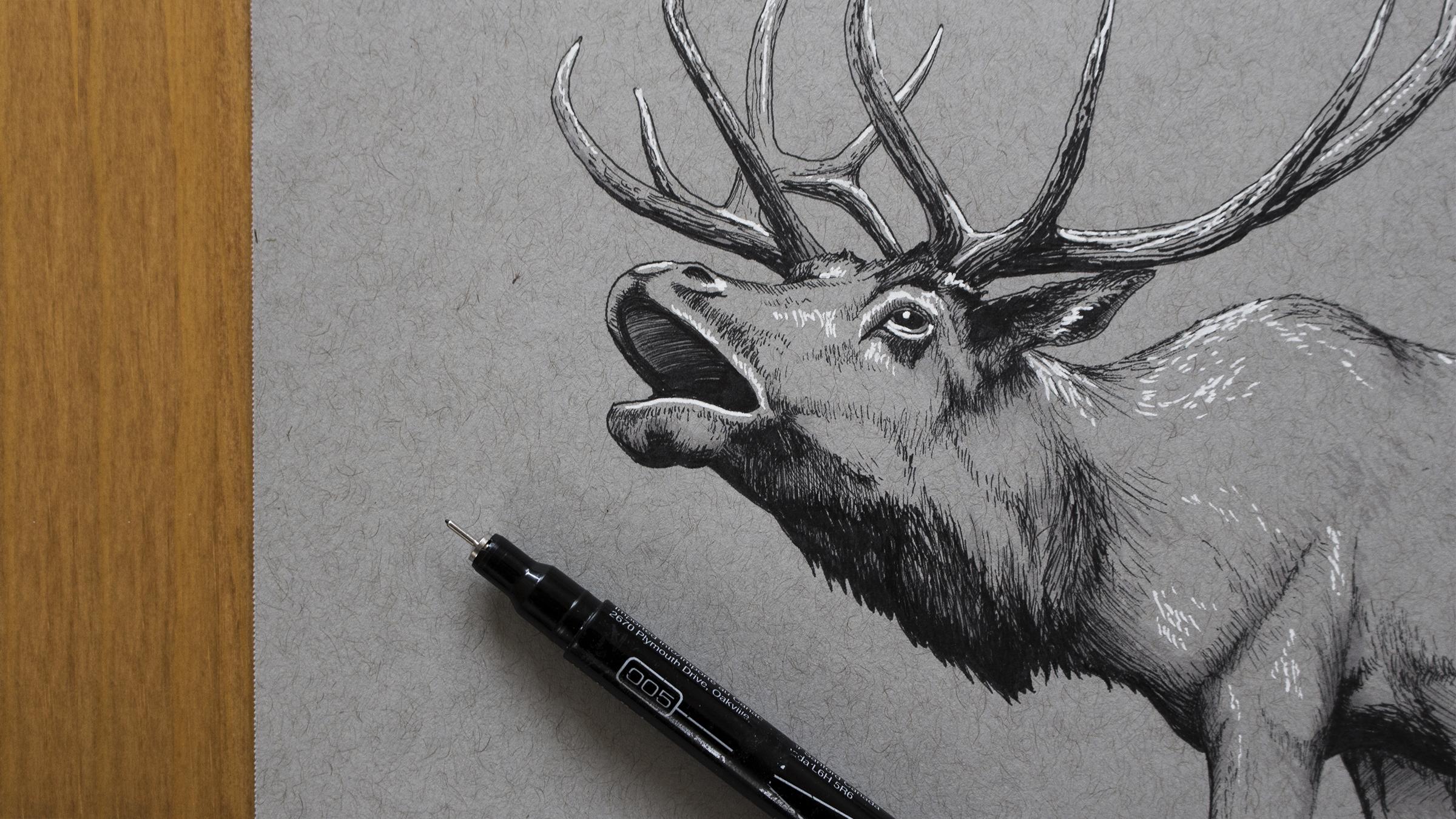 Elk Photo 16x9_FINAL_Small.jpg