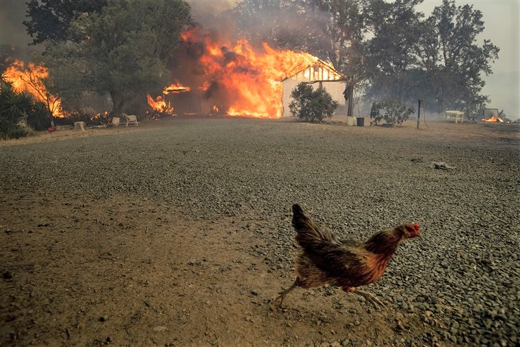 California wildfires.jpg