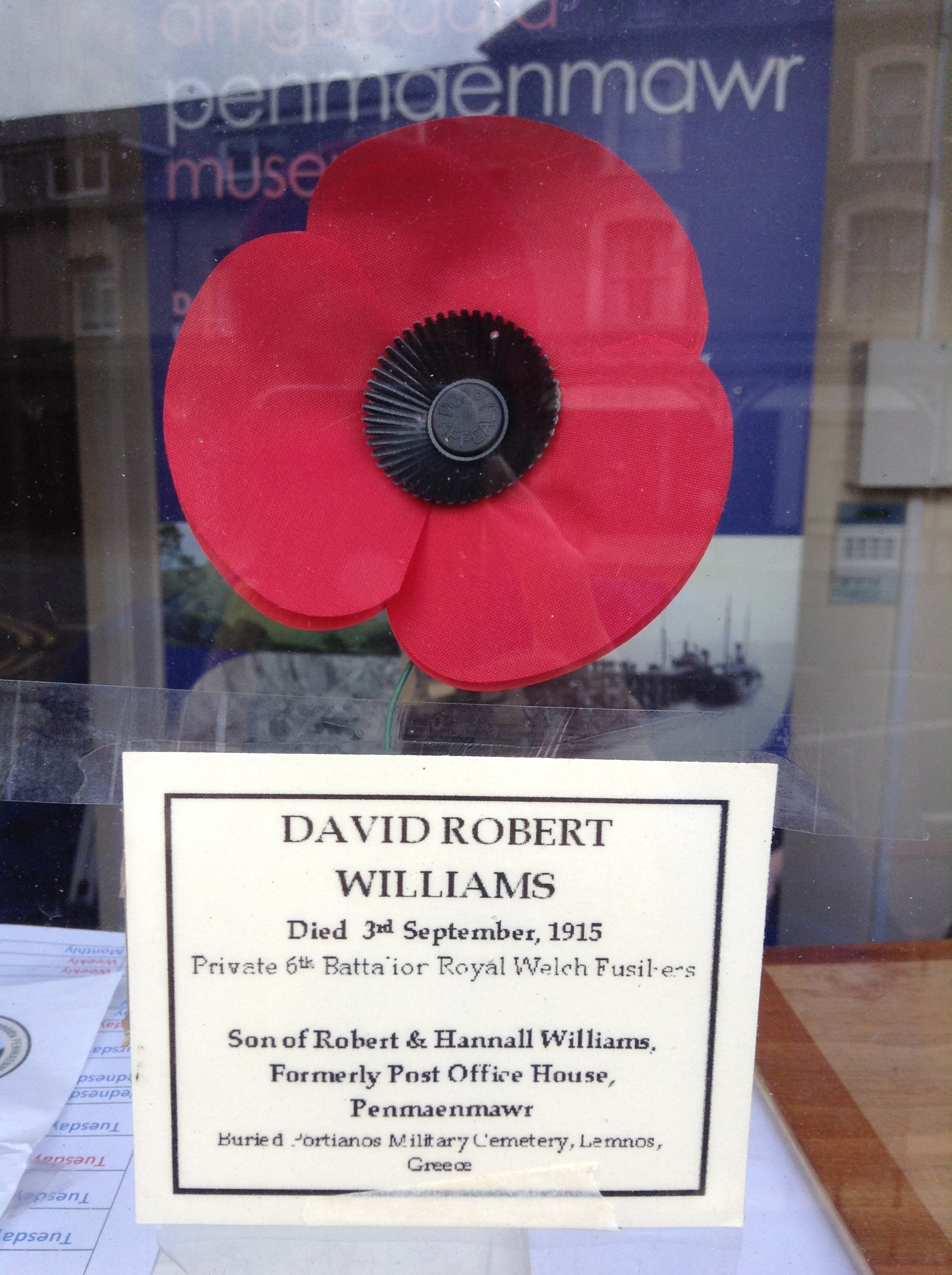David Willliams Poppy 1.JPG