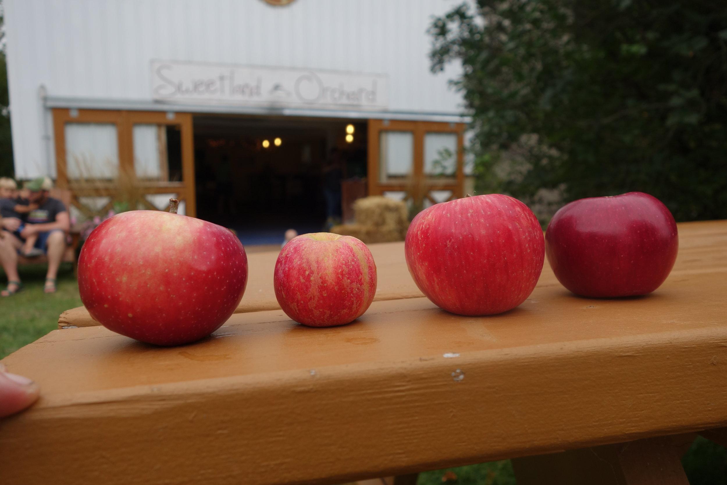 2017-09-16 17.27.02 Week Two Apples.jpg