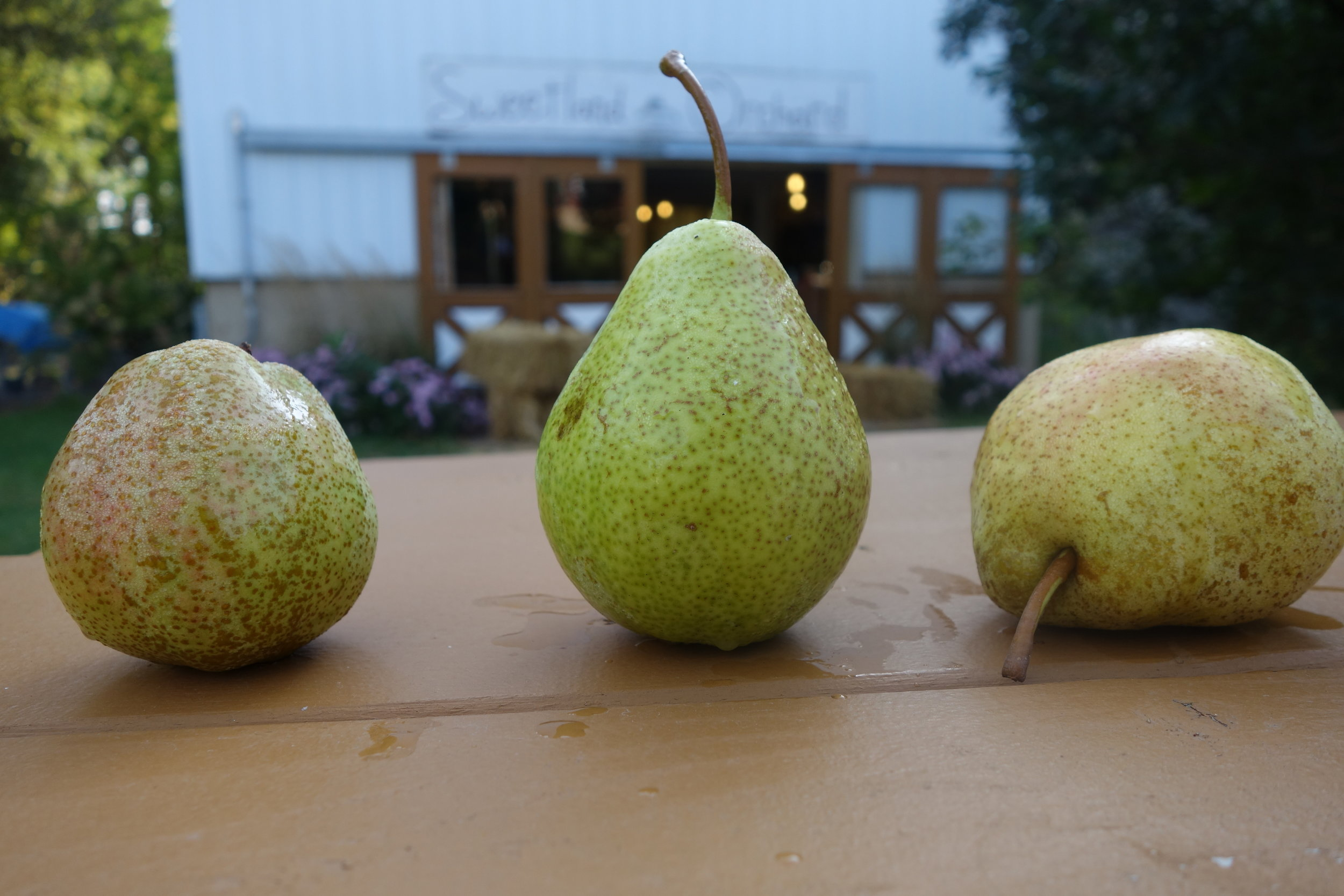 Patten, Luscious, and Jung pears.