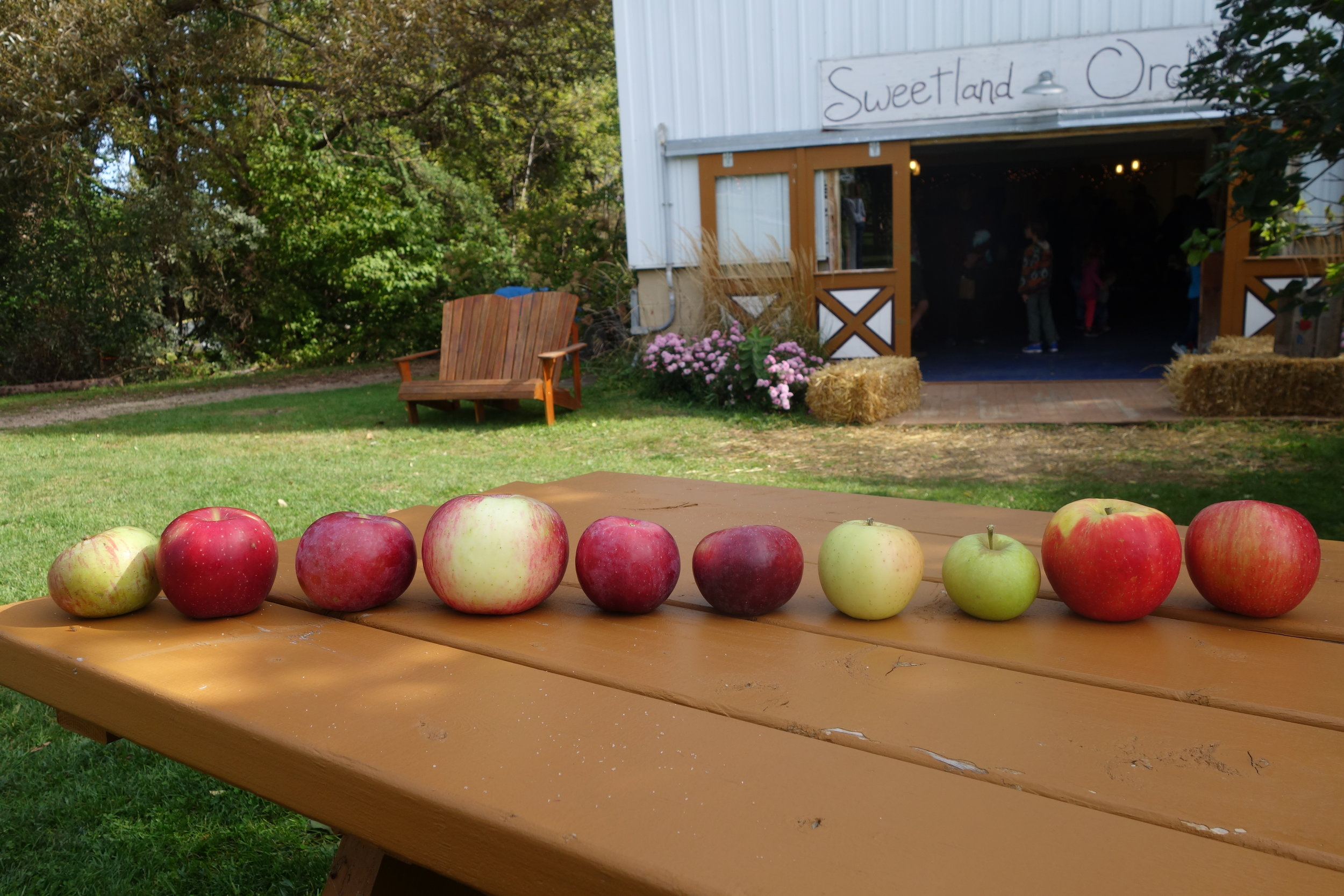 From left:Hibernal, Haralson, McIntosh (though we sold out of this yesterday), Wolf River, Spartan, Liberty, Honeygold, Shamrock, Honeycrisp, and Sweet Sixteen.