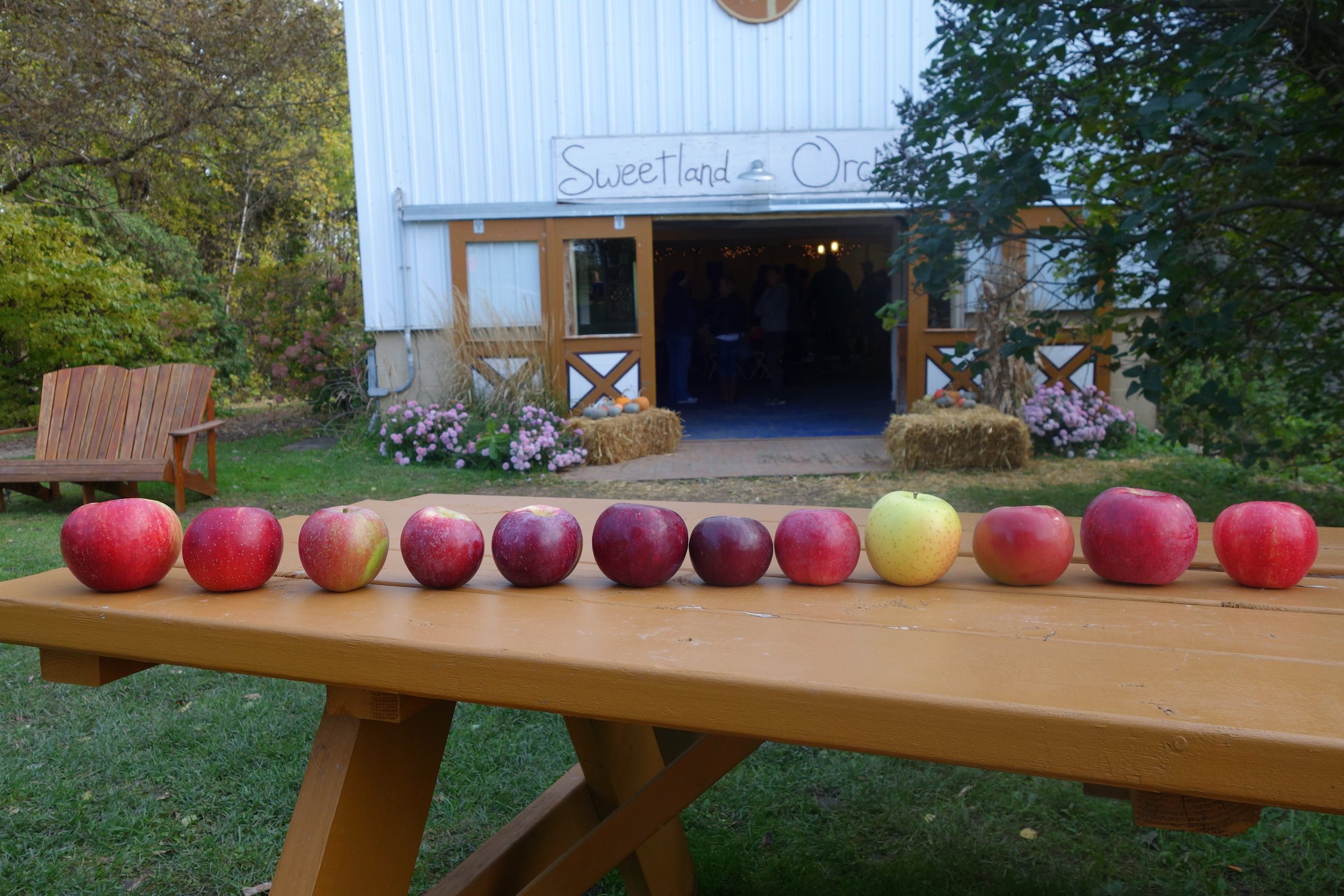 This weekend's apples: Prairie Spy, Haralson, Regent, Liberty, Macoun, Cortland, Ruby Jon, SnowSweet, Honeygold, Connell Red/Fireside, Honeycrisp.