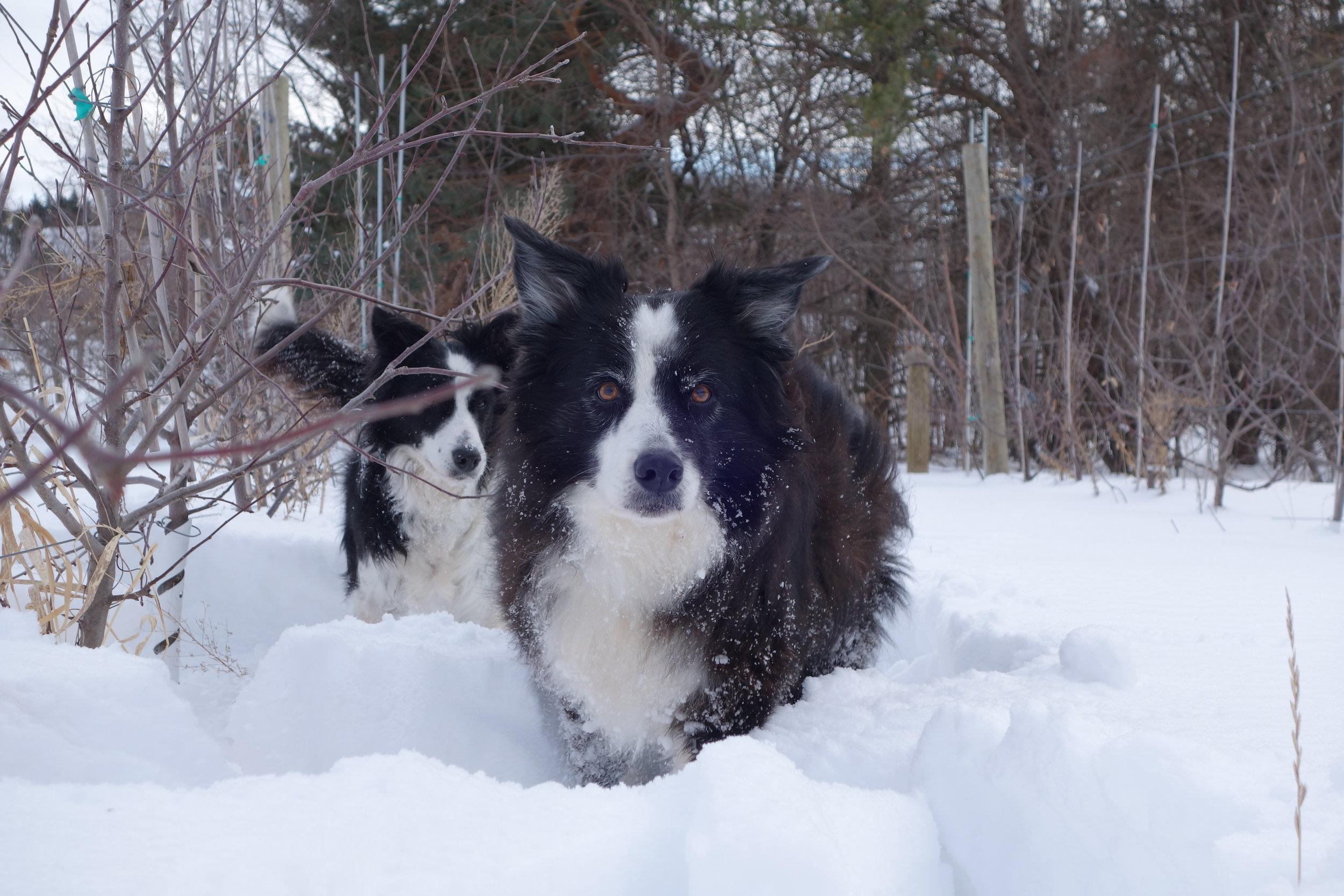 Fletcher Loves the Snow