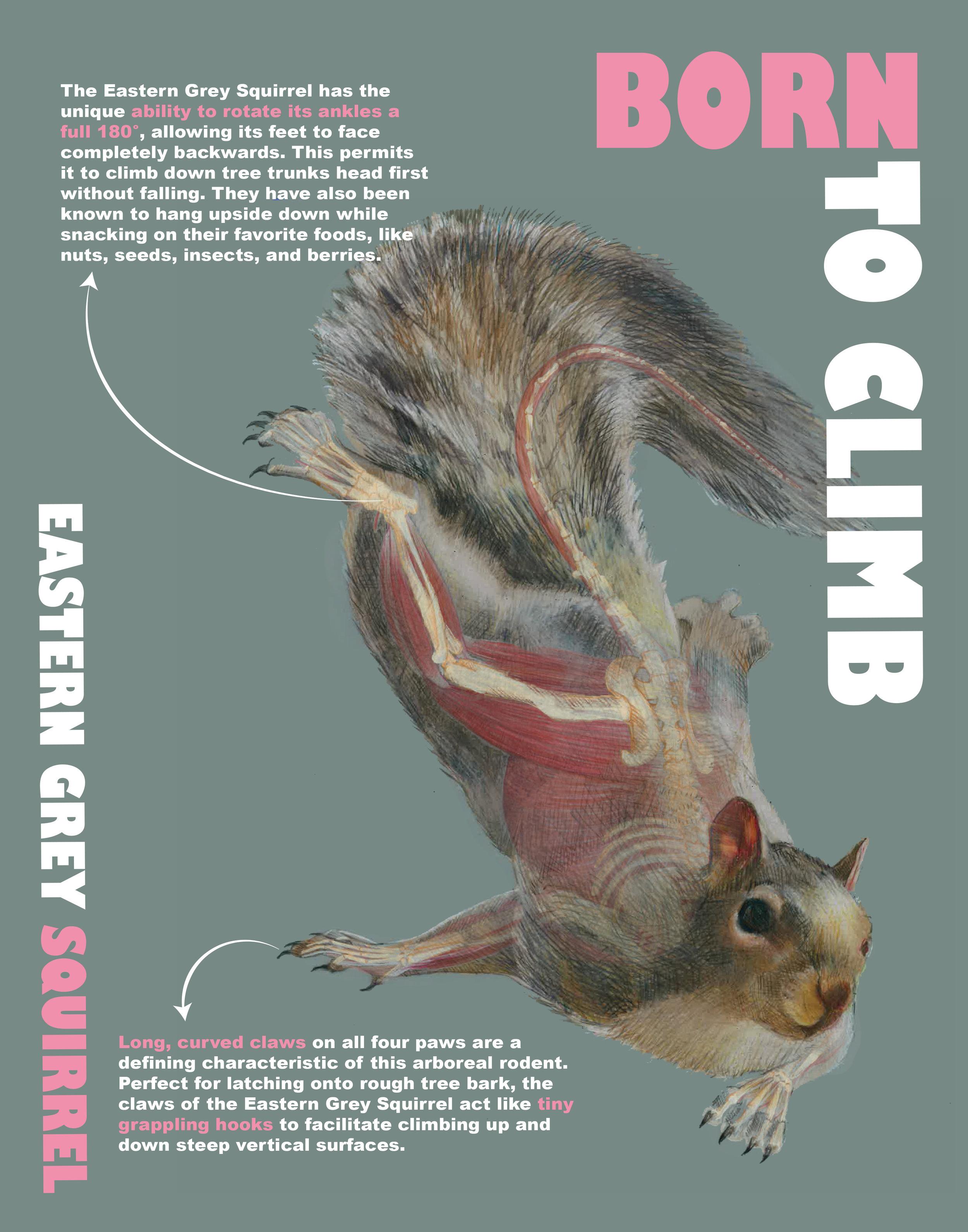 Final Poster Squirrel.jpg