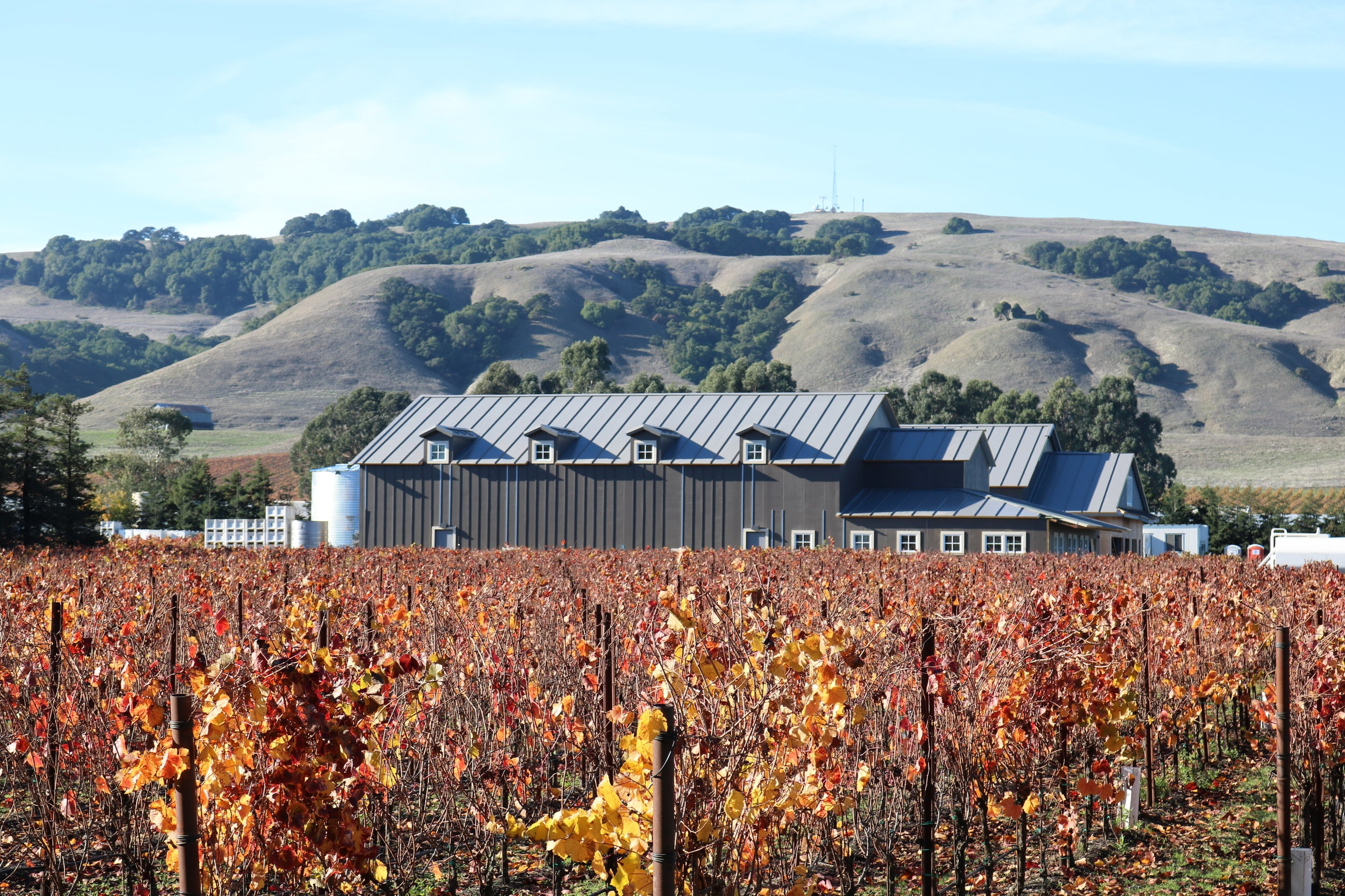 Carneros Chronicles - Visit here to discover what is happening at our flagship Sonoma Carneros winery. Read the latest musings from our winemaker, Michael Carr, and hear about updates in and around our vineyards.