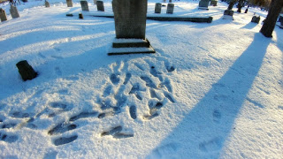 footprints d.jpg