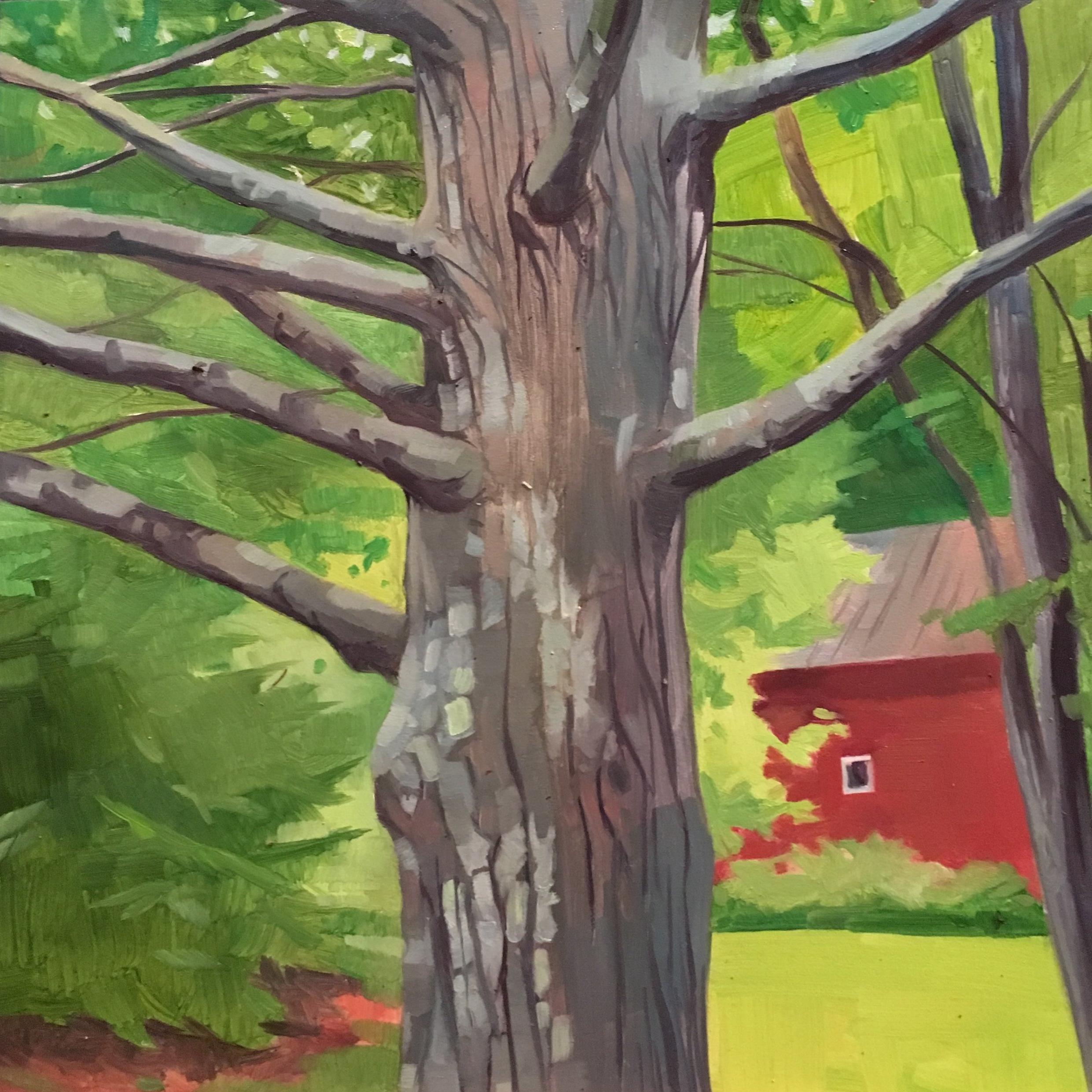 "Vermont Tree   Oil on Wood  8"" x 8"""
