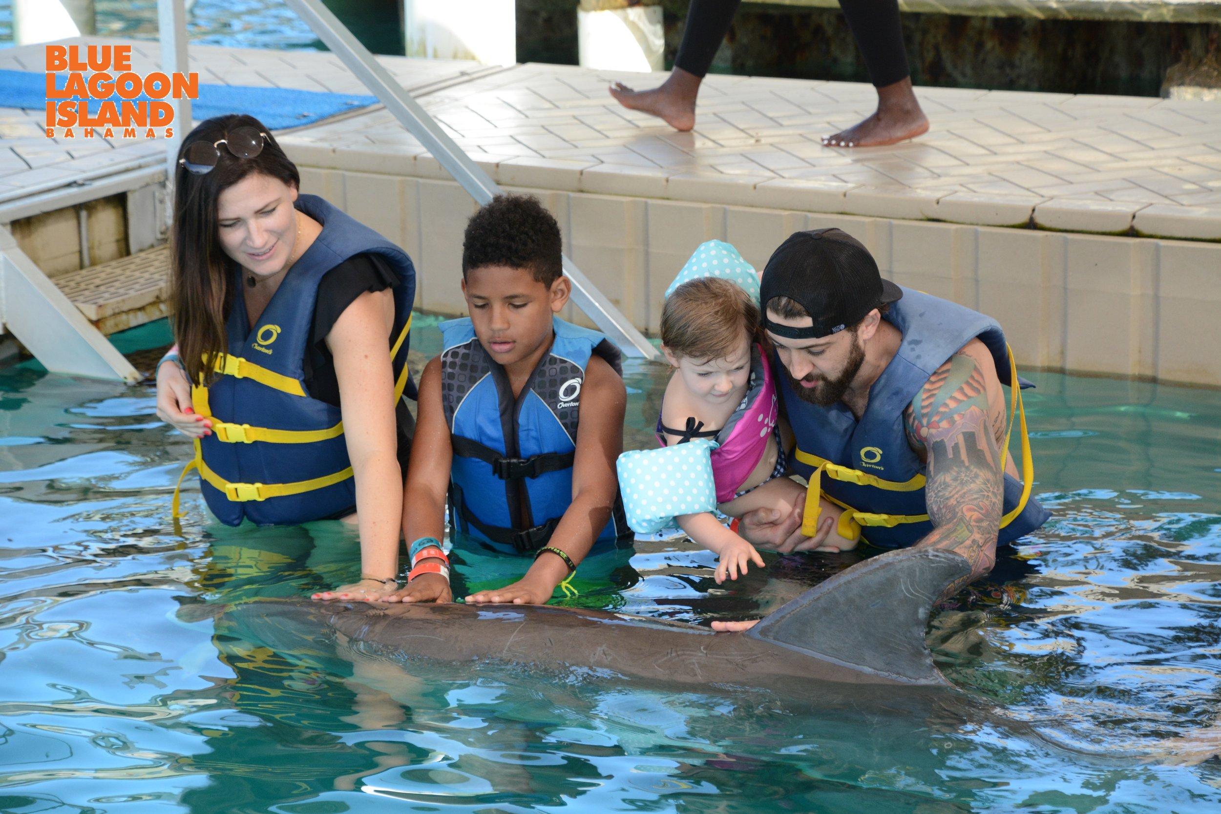 Nassau dolphin swim