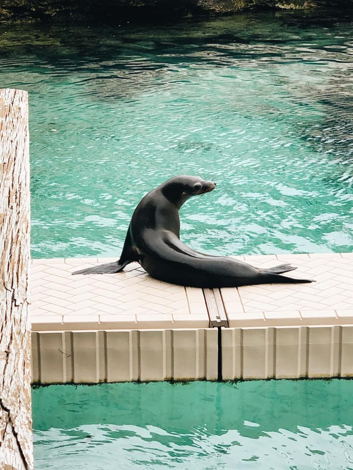 Blue lagoon island sea lion sea lion encounter