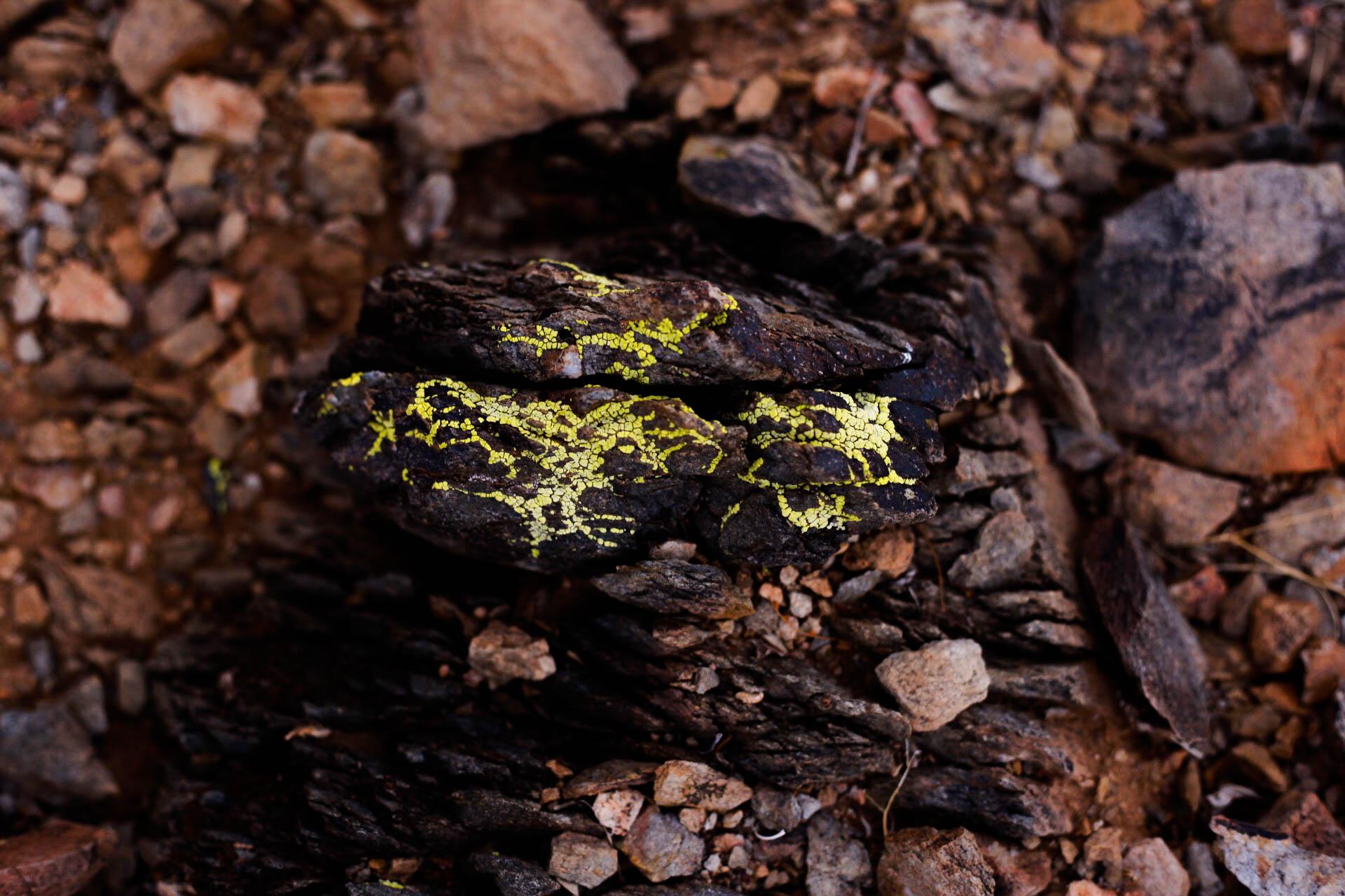 Pathways Even On The Rocks, Sonoran Desert Preserve